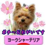 Kosumosumomo_2